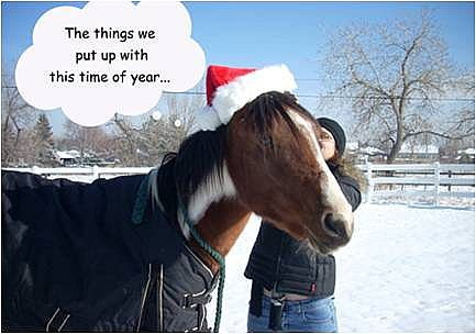 funny horse pictures. Funny Horse Photos